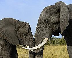 Namibia - Botswana, Kai-Uwe Küchler