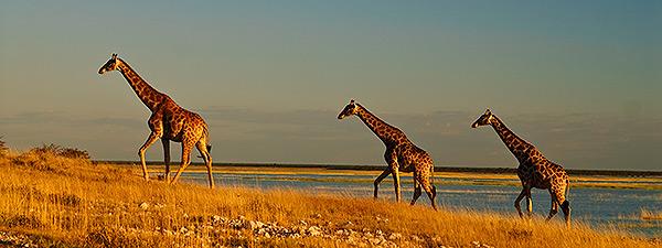 Namibia. Der Diamant Afrikas