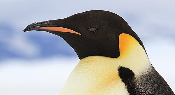 Antarctika-Stellke