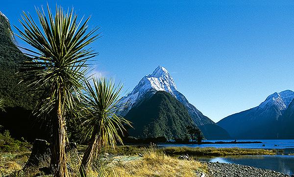 Neuseeland Bleyer